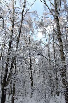 winter, snow, ice,