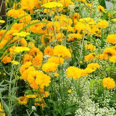 9 Meilleures Images Du Tableau Les Fleurs Jaunes Yellow Flowers
