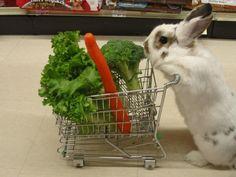 Shopping Bunny!