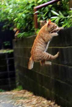 とう! #cat #neko #猫 on Twitpic
