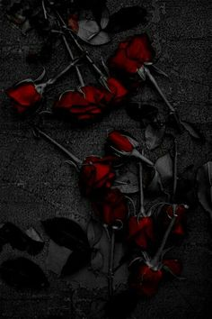 Super Ideas For Photography Dark Beauty Fantasy Gothic Rose Wallpaper, Wallpaper Backgrounds, Gothic Wallpaper, Black Flowers Wallpaper, Red And Black Wallpaper, Gif Kunst, Red Aesthetic, Aesthetic People, Gothic Art