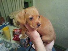 Dog mixes, 3 months and A dog on Pinterest