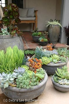 Baker-pots From 'Gardening Gone Wild', these succulents pots are grouped together for impact. I like the concrete pots with the sed
