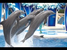 """The Complete 2017 SeaWorld """"Blue Horizons"""" Dolphin Show"""
