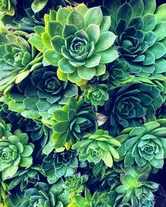 Succulents 🌵🌱💚