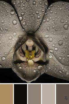 ZJ Colour Palette 454 #colourpalette #colourinspiration