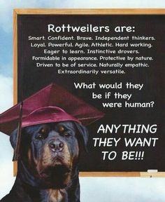Find Out More On The Loyal Rottweiler Dogs Exercise Needs Rottweiler Quotes, Rottweiler Facts, German Rottweiler, Rottweiler Love, Rottweiler Puppies, Beagle, Big Dogs, Dogs And Puppies, Doggies