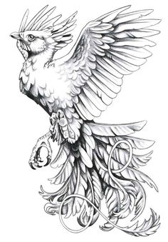 Tattoo artist: harpyja   http://harpyja.deviantart.com/    Tattoo Description: Tattoo sketch of phoenix bird in black at flight moment