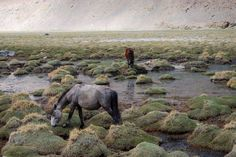 Rivers bring people, who bring livestock and grow farms. Such is the power of a river. In the mountains, you'll often find wild horses grazing by the river. And they're the most beautiful sight, aren't they!