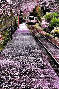 """lifeisverybeautiful: """"Cherry Blossom, Okayama, Japan Arrival in spring by Minoru Matsumura """" What A Wonderful World, Beautiful World, Beautiful Places, Beautiful Pictures, Beautiful Scenery, Amazing Places, Places To Travel, Places To See, Trains"""