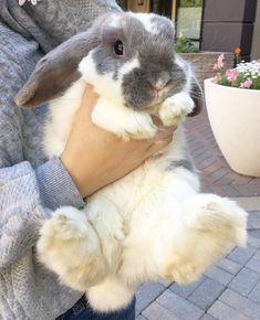 웃♥유Yewangmkz #cute #rabbit