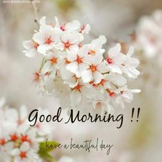 good morning wishes - good morning quotes ` good morning ` good morning quotes inspirational ` good morning quotes for him ` good morning wishes ` good morning greetings ` good morning quotes funny ` good morning beautiful Good Morning Images Flowers, Good Morning Image Quotes, Morning Quotes Images, Good Morning Beautiful Images, Cute Good Morning, Good Morning Images Hd, Morning Greetings Quotes, Good Morning Picture, Good Morning Messages