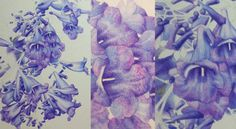 Jacaranda Painting - A Major Work in Watercolour - Heidi Willis Day And Time, No Time For Me, Textures And Tones, Heart And Mind, Watercolour, Things To Come, Colours, Drawings, Flowers