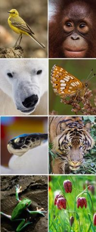 With so many species and ecosystems in dire need of protection, which ones are the most important to save?  Do popular iconic species have more conservation value than a obscure ones?