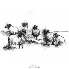 Fine Art Drawing, Art Drawings, Sketch A Day, Connemara, Surface Design, Sheep, Giclee Print, Moose Art, How To Draw Hands