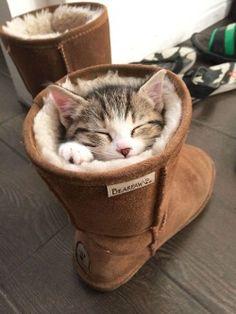 Quand ils se cachent dans les plus improbables des endroits…Selon une récente étude scientifique, le chat serait en fait un liquide.