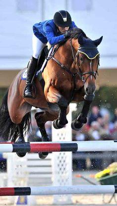 Crown Z 「Carthago Z x Ratina Z」 Zangersheide Stallion
