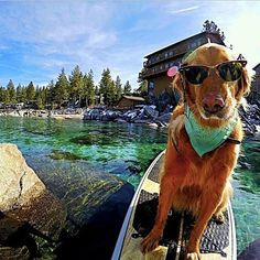 Cute sup pup!
