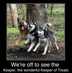 funny animals pictures with captions (54 pict) | Funny Pictures