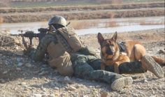 """Meet one of America's furry war heroes. New book """"Top Dog"""" tells the story of IED-sniffing dog Lucca Military Working Dogs, Military Dogs, Police Dogs, Military Life, Military Photos, War Dogs, Us Marine Corps, German Shepherd Dogs, German Shepherds"""