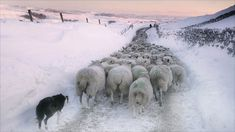 from the BBC landscape photos of the year.  I think they need a sheep photos of the year column. But that could be just me.