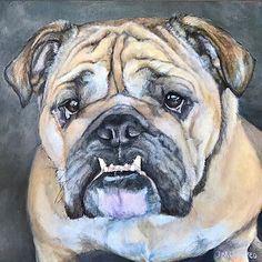 12x12  English Bulldog - Ms Daisy