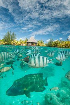 Bora Bora. http://www.worldtravelspecialists.biz/aeriole