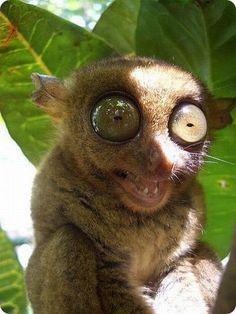 strangest-and-rarest-animals-in-world28