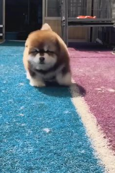 Cute Baby Dogs, Cute Baby Animals, Cute Puppies, Funny Animals, Alaskan Malamute Puppies, Dog Training Techniques, Dog Activities, Animal Kingdom, Fur Babies