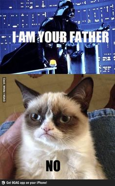 1000 Images About Grumpy Kitty On Pinterest Grumpy Cat