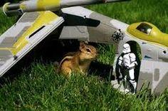 stromtropper encounters a chipmunk