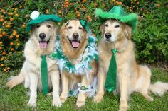 Happy St. Patty's Day from Bentley, Brie and Tyler