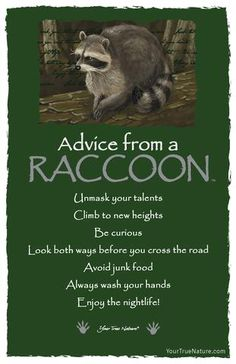 Spirit animal totem advice from a raccoon. Spirit Animal Totem, Animal Spirit Guides, Animal Totems, Advice Quotes, Life Quotes, Advice Cards, Wisdom Quotes, Animal Medicine, Power Animal