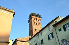 Famous Torre Guinigi (Guinigi Tower) in Lucca town in Tuscany region, Italy