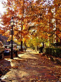 Shady Street II by evanlochem on Flickr