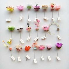 DIY tissue paper or watercolor butterfly display case.  Or photocopy picture of brightly colored flowers/botanicals, cut them out and pin thenm to a white board with labels.  old wooden frame or glass toped display box