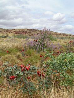 West coast - wild flowers
