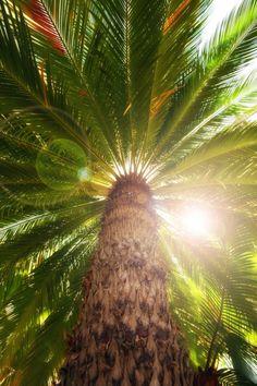 mistymorningme:Palm Tree in Summer by Douglas Brown