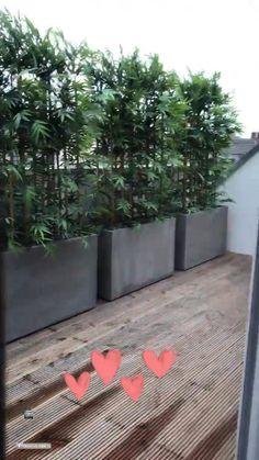 Garden Wall Designs, Vertical Garden Design, Backyard Garden Design, Bamboo Hedge, Bamboo Planter, Planter Pots, Garden Privacy, Balcony Privacy, Outdoor Balcony