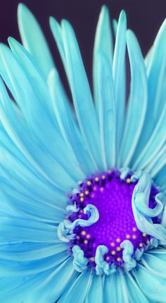 """Flower Fairy Lights"" by Stefanie Jasper Flower Background Wallpaper, Flower Backgrounds, Pink Wallpaper, Wallpaper Backgrounds, Exotic Flowers, Amazing Flowers, Pretty Flowers, Blue Flowers, Flower Fairy Lights"