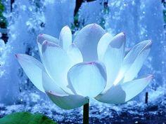 fondos de flores para fotos hermoso