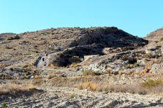 Lizard trail running day 1