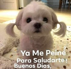 Funny Good Night Quotes, Good Day Quotes, Good Morning Funny, Good Morning Good Night, Funny Quotes, Funny Spanish Memes, Spanish Humor, Spanish Quotes, Good Day Wishes