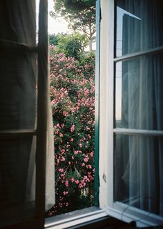 lovely view - roses outside an open window