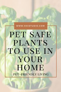 Check out these dog and cat safe houseplants to use around your home. Perfect for indoor or outdoor gardens! Mid Century Modern Kitchen, Mid Century Modern Design, L Office, Office Ideas, Dog Safety, Safety Tips, Small Purple Flowers, Fast Growing Plants, Pet Safe