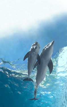 Aweee It's Beautiful Winter with Sweet Baby Hope. Not long after Hope was found orphaned and alone ~ Movie Dolphin Tale tells their story of rescue Beautiful Creatures, Animals Beautiful, Dolphin Tale 2, Clearwater Marine Aquarium, Baby Animals, Cute Animals, Bottlenose Dolphin, Wale, Mundo Animal
