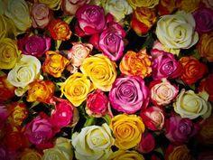 Reine marguerite : estime, confiance. Renoncules : reproches. Rhododendron : danger. Rose blanche : amour pur. Rose bleue : mystère, idéalisme. Rose jaune : idéalisme. Rose lavande : coup de foudre. Rose jaune : infidélité. Rose lavande : coup de foudre. Rose rose : amour sincère. Rose rouge : passion. Douze roses rouges signifie une demande en mariage ! Rose rouge et blanche : union.