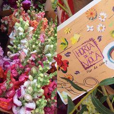 41 Ideas De Verd Ideas De Jardinería Jardinería Jardines