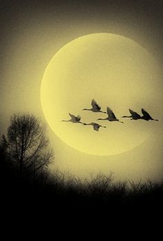 Brilliant moon, shining bright. Illuminating birds in flight.                                                                                                                                                     More