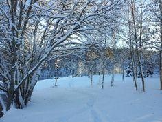 Den første snøen i Estenstadmarka